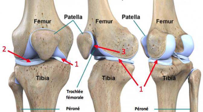 Anatomie du genou : comprendre arthroscopie et chirurgie des ménisques
