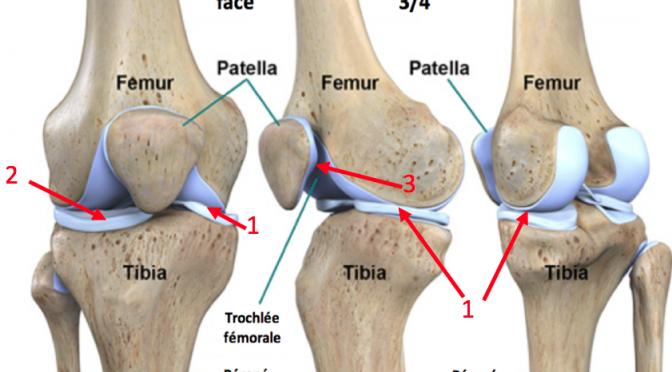 Anatomie du genou : comprendre les causes de douleurs du genou et de l'arthrose